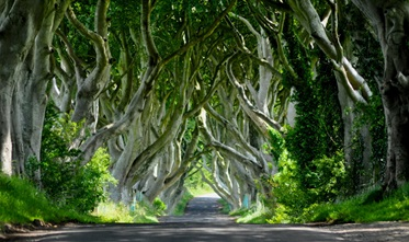 The Dark Hedges, Ballymoney, Noord-Ierland