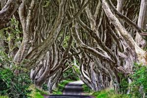 Noord Ierland, Dark Hedges