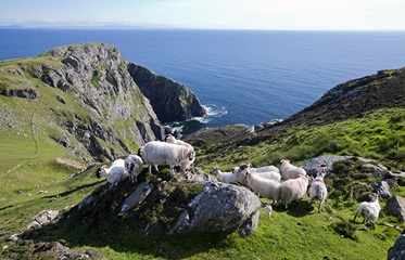 Slieve League Cliffs, Ierland