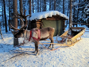 Rondreis of wintersport in Finland, op Rendier Safari in Finland